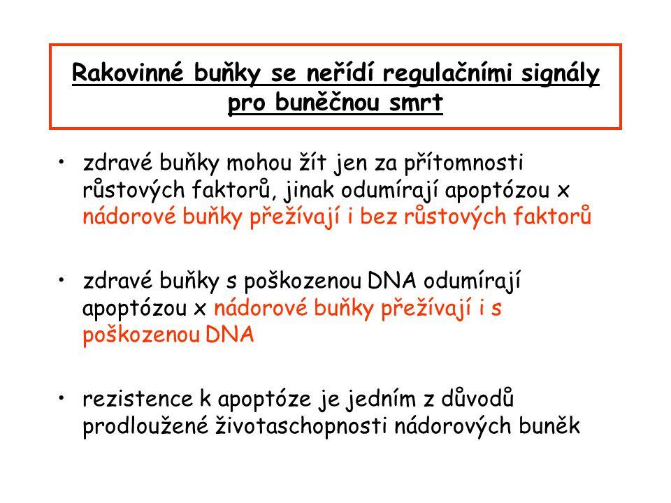 Rakovinné buňky se neřídí regulačními signály pro buněčnou smrt zdravé buňky mohou žít jen za přítomnosti růstových faktorů, jinak odumírají apoptózou x nádorové buňky přežívají i bez růstových faktorů zdravé buňky s poškozenou DNA odumírají apoptózou x nádorové buňky přežívají i s poškozenou DNA rezistence k apoptóze je jedním z důvodů prodloužené životaschopnosti nádorových buněk
