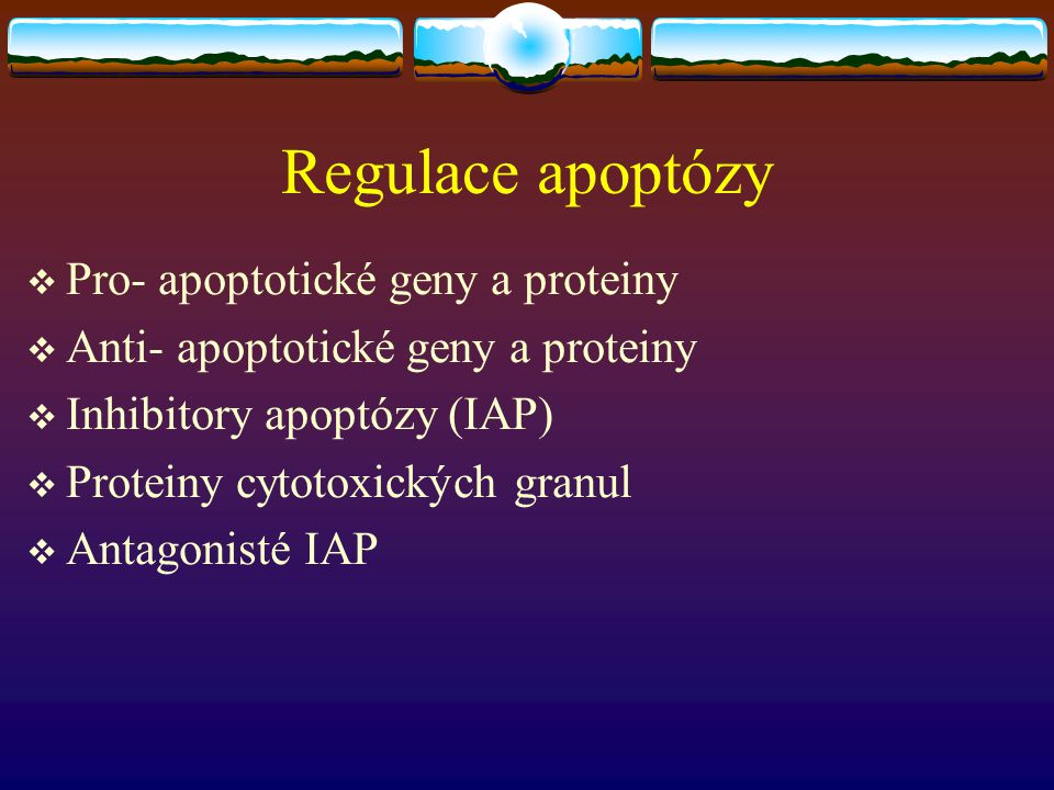 Regulace apoptózy  Pro- apoptotické geny a proteiny  Anti- apoptotické geny a proteiny  Inhibitory apoptózy (IAP)  Proteiny cytotoxických granul 