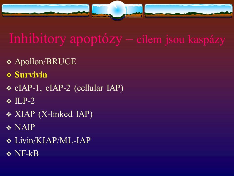 Inhibitory apoptózy – cílem jsou kaspázy  Apollon/BRUCE  Survivin  cIAP-1, cIAP-2 (cellular IAP)  ILP-2  XIAP (X-linked IAP)  NAIP  Livin/KIAP/