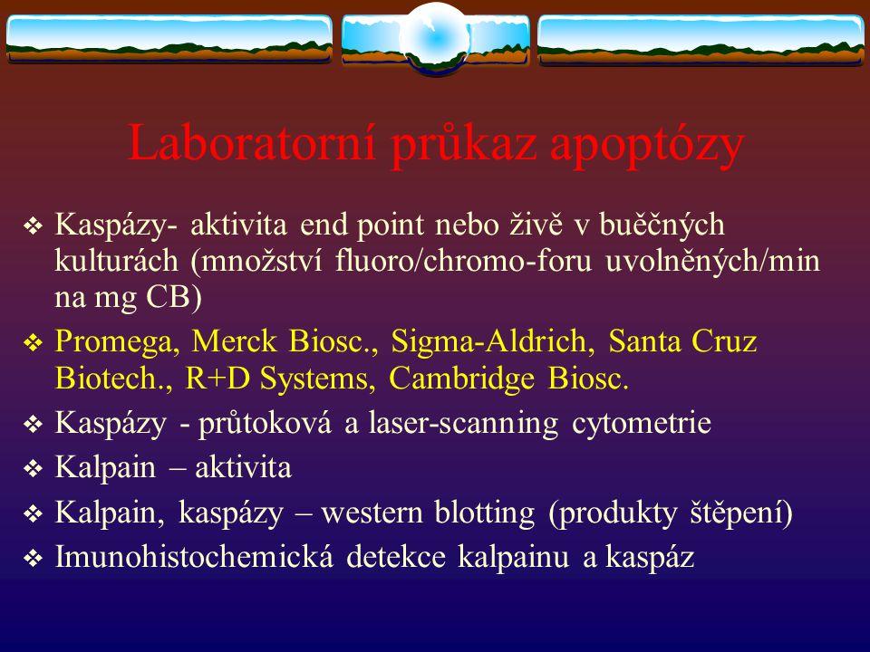 Laboratorní průkaz apoptózy  Kaspázy- aktivita end point nebo živě v buěčných kulturách (množství fluoro/chromo-foru uvolněných/min na mg CB)  Prome