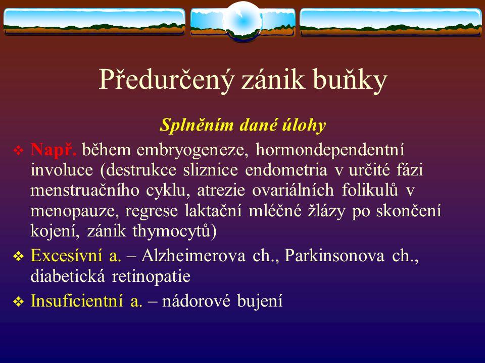 Předurčený zánik buňky Splněním dané úlohy  Např. během embryogeneze, hormondependentní involuce (destrukce sliznice endometria v určité fázi menstru