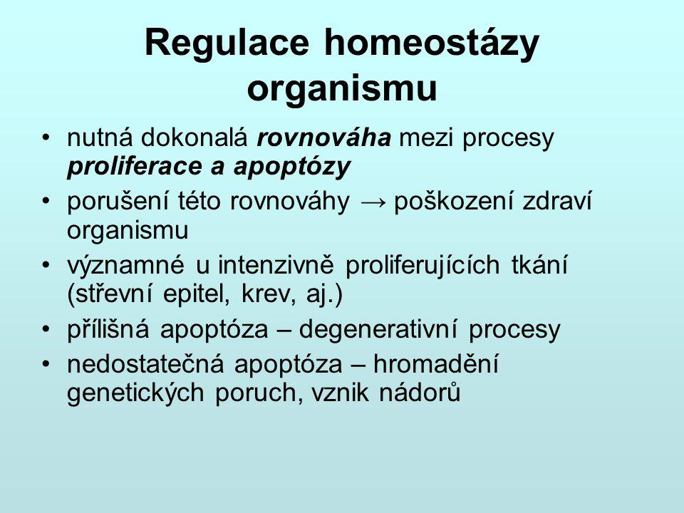 Regulace homeostázy organismu nutná dokonalá rovnováha mezi procesy proliferace a apoptózy porušení této rovnováhy → poškození zdraví organismu význam