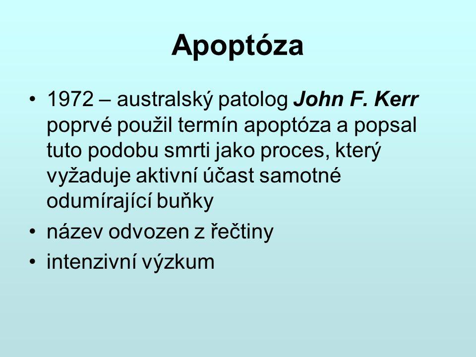 Apoptóza 1972 – australský patolog John F. Kerr poprvé použil termín apoptóza a popsal tuto podobu smrti jako proces, který vyžaduje aktivní účast sam
