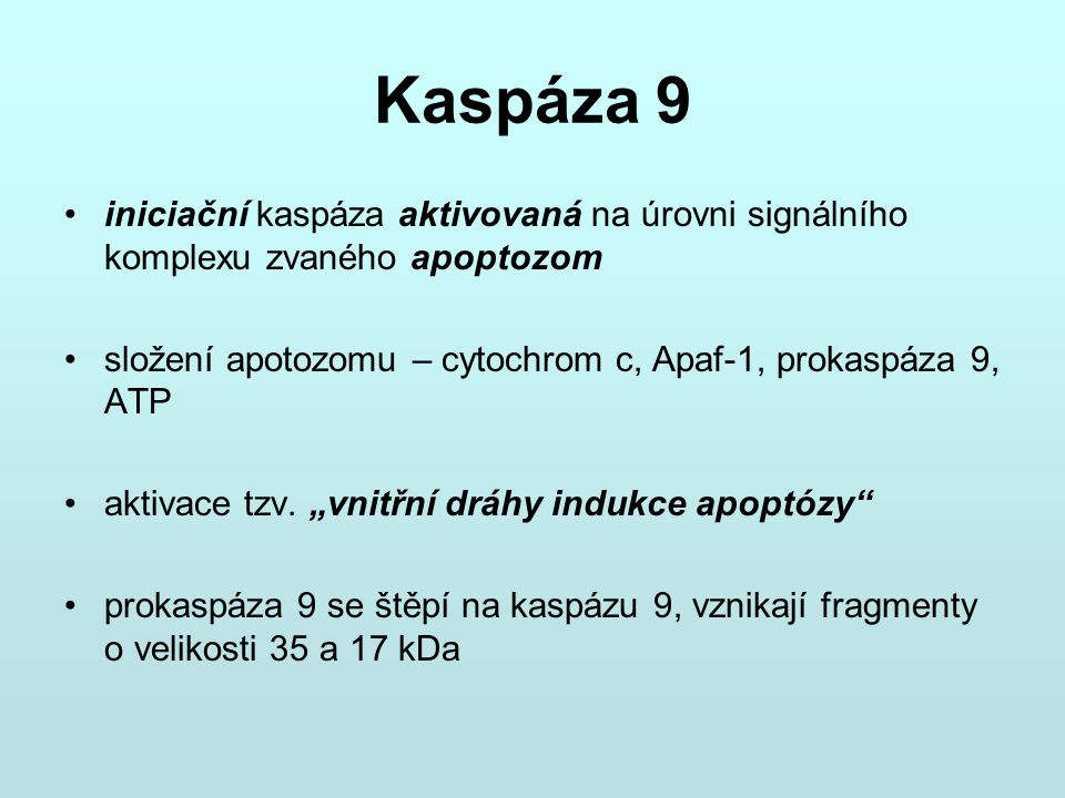 Kaspáza 9 iniciační kaspáza aktivovaná na úrovni signálního komplexu zvaného apoptozom složení apotozomu – cytochrom c, Apaf-1, prokaspáza 9, ATP akti