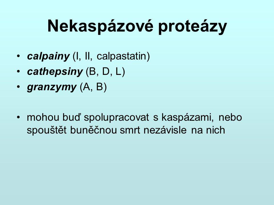 Nekaspázové proteázy calpainy (I, II, calpastatin) cathepsiny (B, D, L) granzymy (A, B) mohou buď spolupracovat s kaspázami, nebo spouštět buněčnou sm