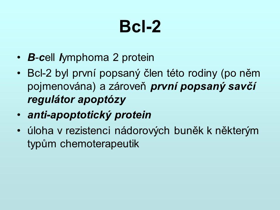 Bcl-2 B-cell lymphoma 2 protein Bcl-2 byl první popsaný člen této rodiny (po něm pojmenována) a zároveň první popsaný savčí regulátor apoptózy anti-ap