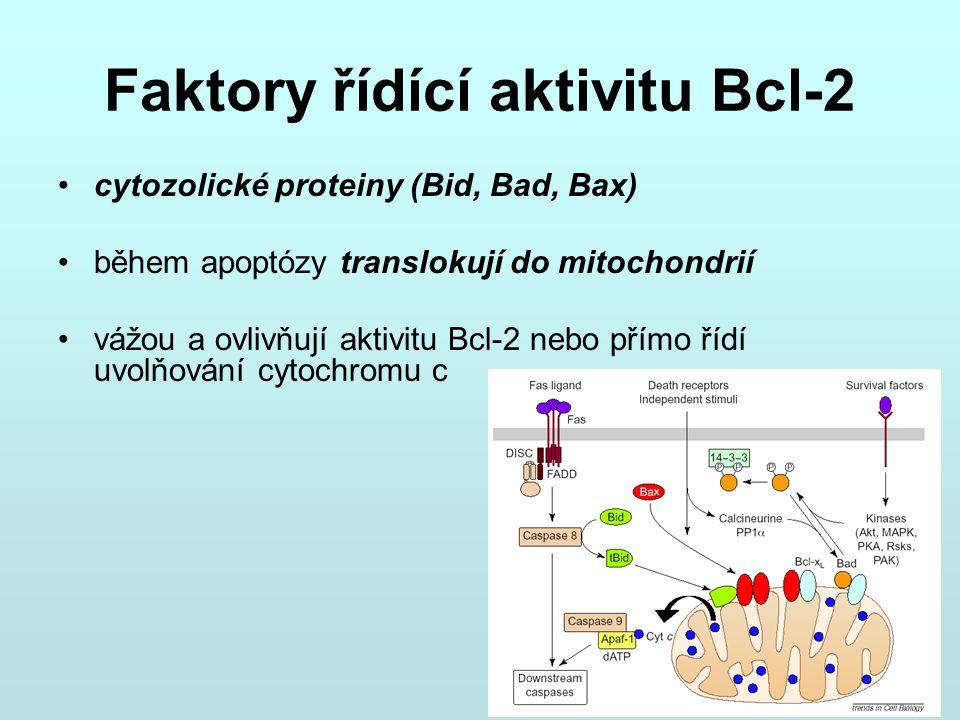 Faktory řídící aktivitu Bcl-2 cytozolické proteiny (Bid, Bad, Bax) během apoptózy translokují do mitochondrií vážou a ovlivňují aktivitu Bcl-2 nebo př