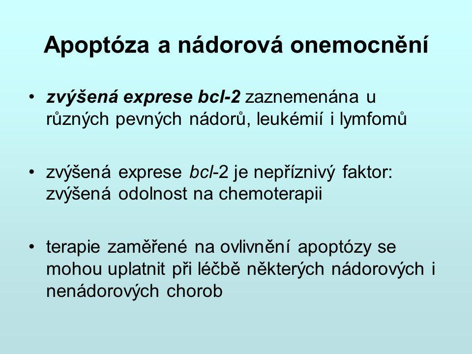 Apoptóza a nádorová onemocnění zvýšená exprese bcl-2 zaznemenána u různých pevných nádorů, leukémií i lymfomů zvýšená exprese bcl-2 je nepříznivý fakt