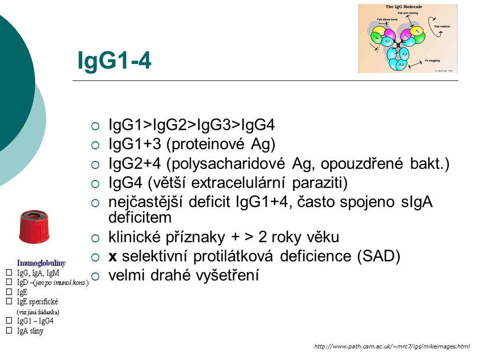 IgG1-4  IgG1>IgG2>IgG3>IgG4  IgG1+3 (proteinové Ag)  IgG2+4 (polysacharidové Ag, opouzdřené bakt.)  IgG4 (větší extracelulární paraziti)  nejčast