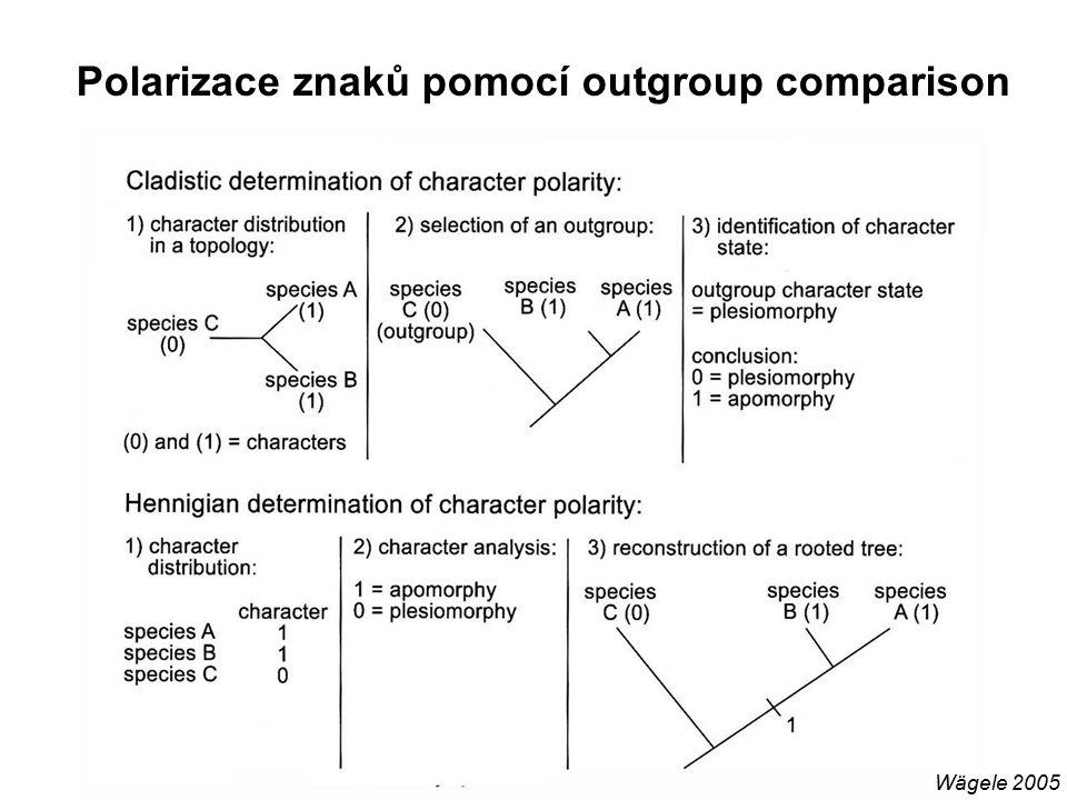 Polarizace znaků pomocí outgroup comparison Wägele 2005