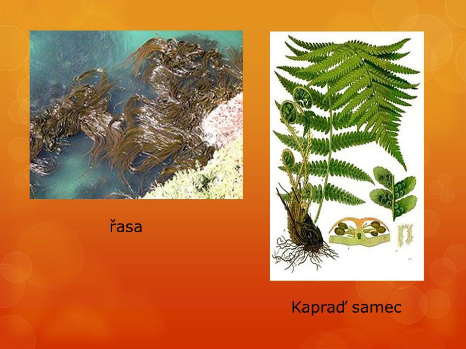 CHMEE2.Soubor:Flower of Pisum sativum.JPG. In: Wikipedia: the free encyclopedia [online].