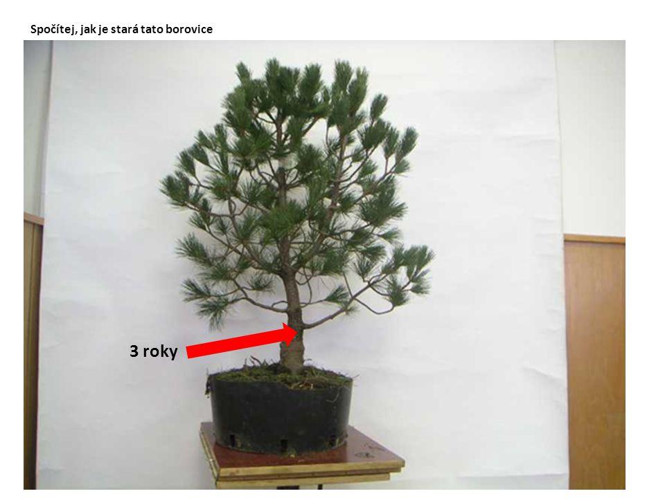 Spočítej, jak je stará tato borovice 3 roky