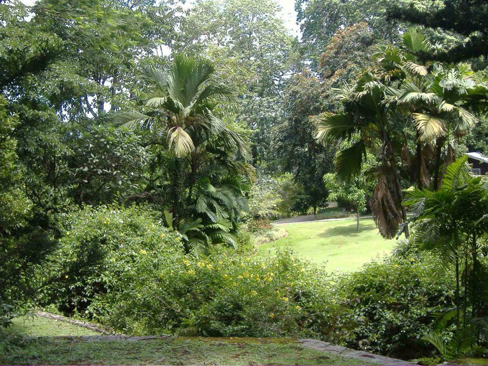 Na Praslinu je národní park v Vallé de Mai ( Údolí Máje) s více než 7 000 palmami Coco - de –Mer s největšími kokosy na světě dosahující až 9 kg.