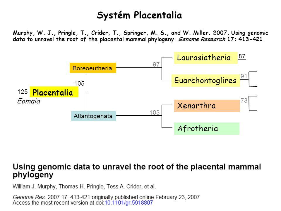 Systém Placentalia 103 97 73 91 87 Placentalia Boreoeutheria Atlantogenata 105 Laurasiatheria Euarchontoglires Xenarthra Afrotheria 125 Eomaia Murphy,