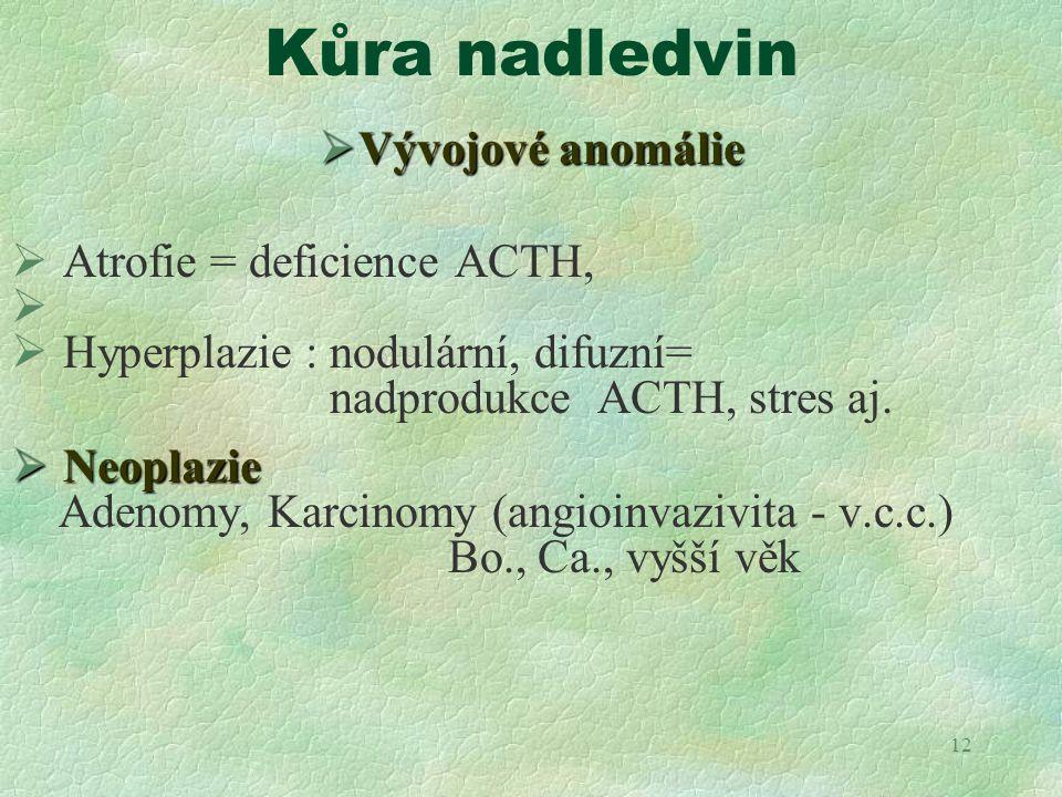 12 Kůra nadledvin  Vývojové anomálie  Atrofie = deficience ACTH,   Hyperplazie : nodulární, difuzní= nadprodukce ACTH, stres aj.