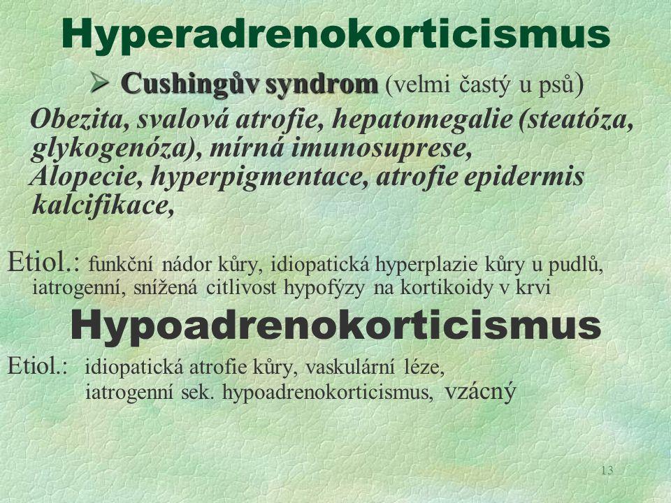 13 Hyperadrenokorticismus  Cushingův syndrom  Cushingův syndrom (velmi častý u psů ) Obezita, svalová atrofie, hepatomegalie (steatóza, glykogenóza)