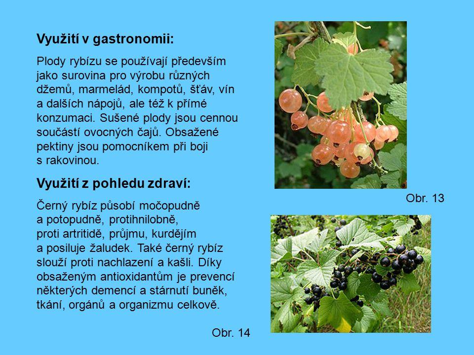 Využití v gastronomii: Plody rybízu se používají především jako surovina pro výrobu různých džemů, marmelád, kompotů, šťáv, vín a dalších nápojů, ale