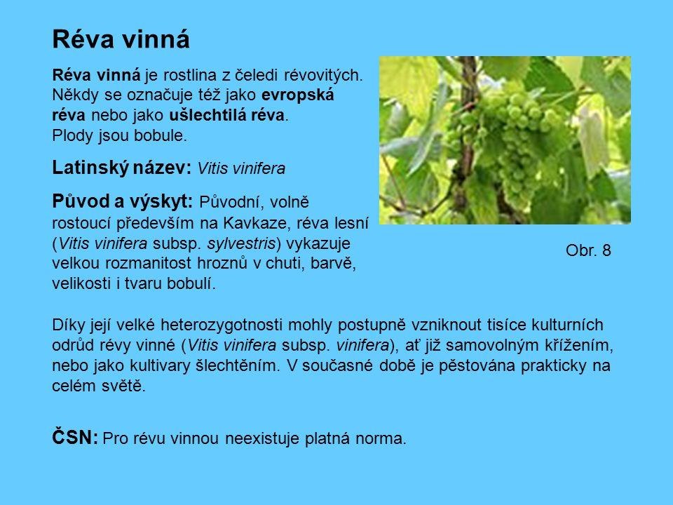 Réva vinná Réva vinná je rostlina z čeledi révovitých. Někdy se označuje též jako evropská réva nebo jako ušlechtilá réva. Plody jsou bobule. Latinský