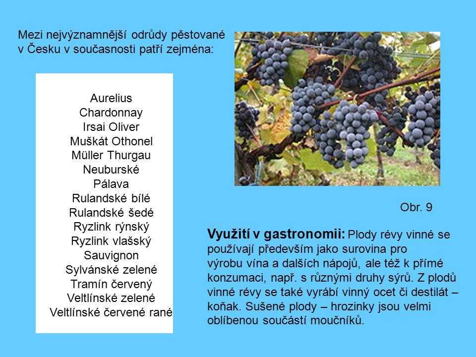Obr. 9 Mezi nejvýznamnější odrůdy pěstované v Česku v současnosti patří zejména: Aurelius Chardonnay Irsai Oliver Muškát Othonel Müller Thurgau Neubur