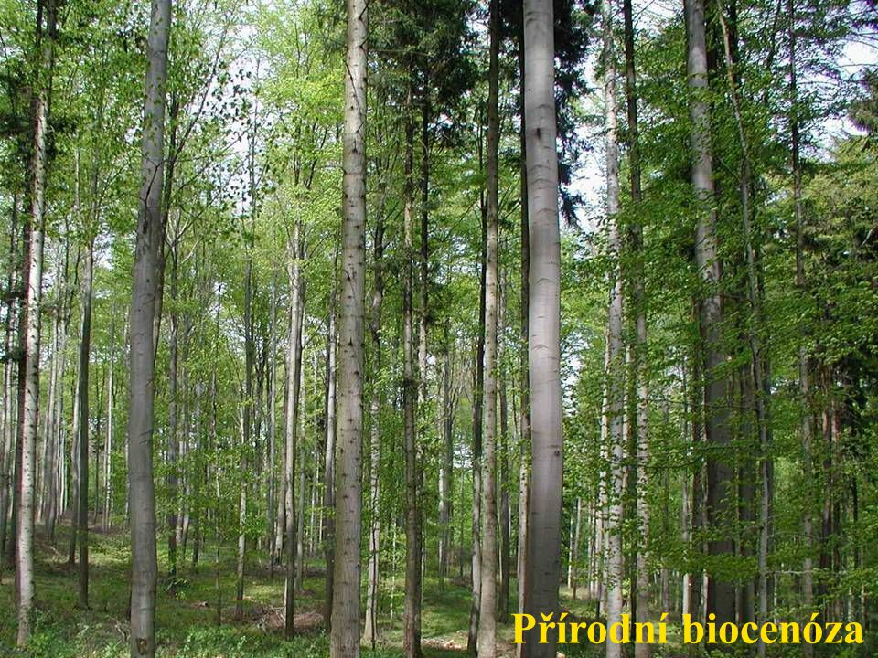 Vlastnosti biocenóz Diverzita (rozmanitost) Indexy druhové biotopová diverzity druhová genetická Ekvitabilita (vyrovnanost) Shannonův index
