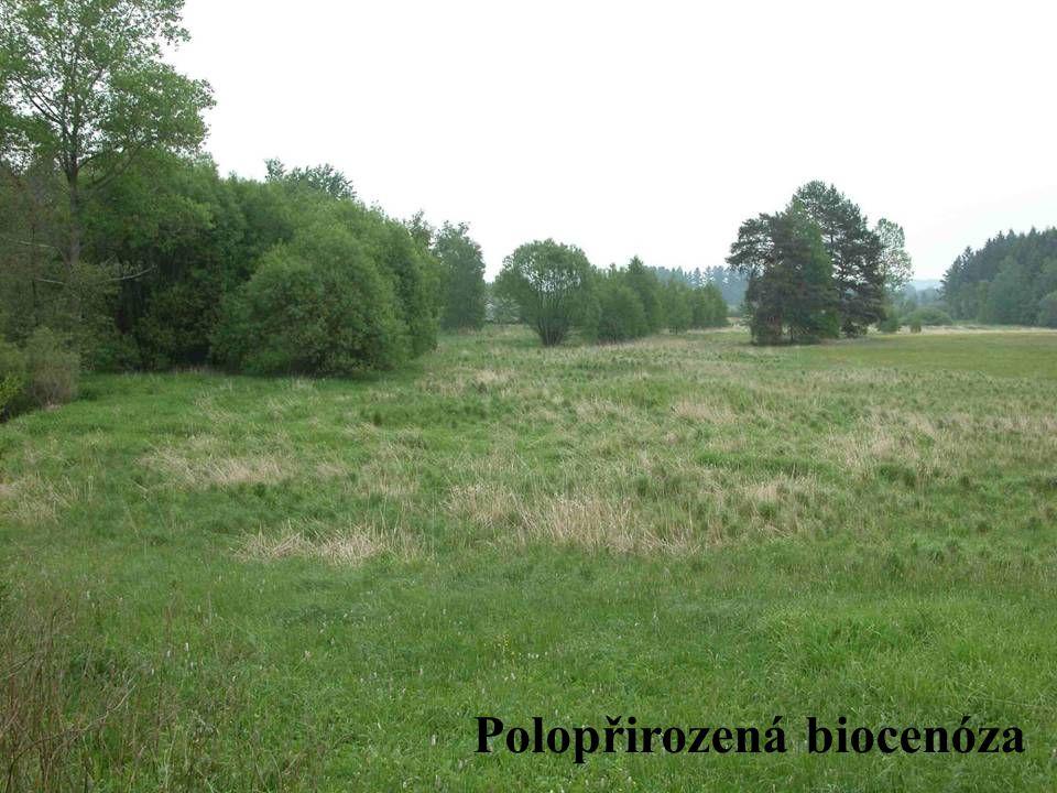 Umělé biocenózy