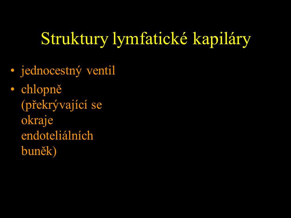 Struktury lymfatické kapiláry jednocestný ventil chlopně (překrývající se okraje endoteliálních buněk)