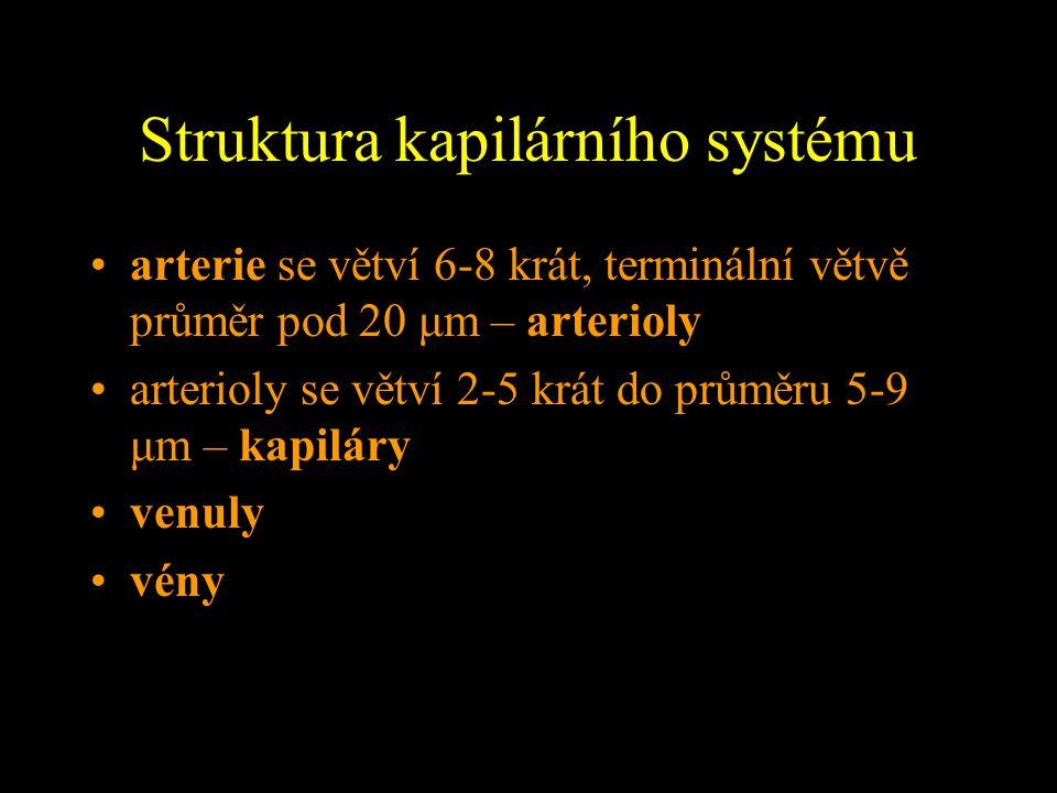 Struktura kapilárního systému arterie se větví 6-8 krát, terminální větvě průměr pod 20 μm – arterioly arterioly se větví 2-5 krát do průměru 5-9 μm –