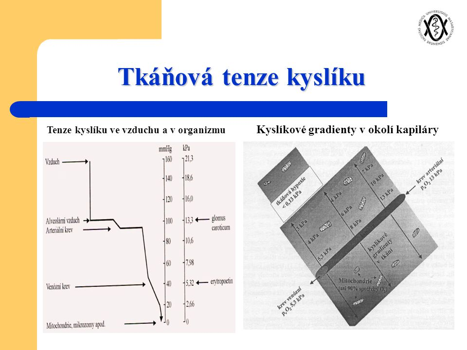 Tkáňová tenze kyslíku Kyslíkové gradienty v okolí kapiláry Tenze kyslíku ve vzduchu a v organizmu