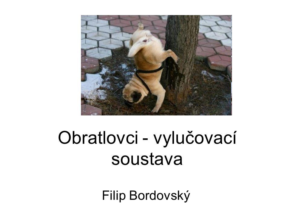 Obratlovci - vylučovací soustava Filip Bordovský