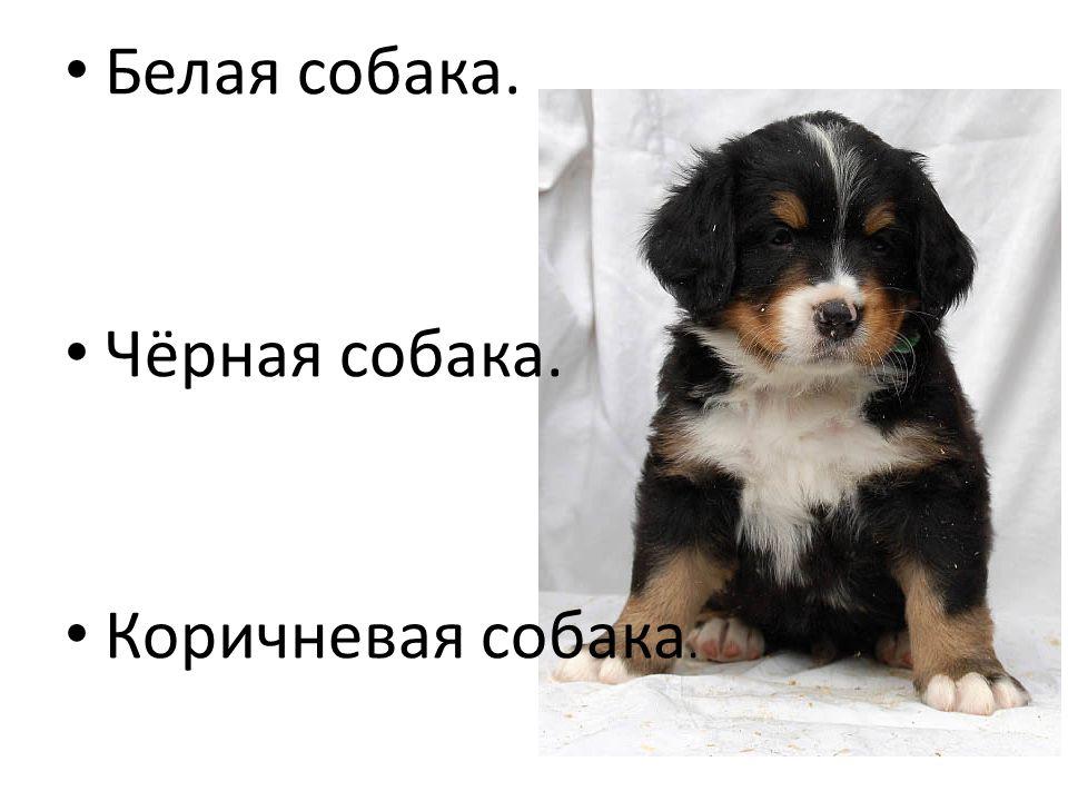 Белая собака. Чёрная собака. Коричневая собака.