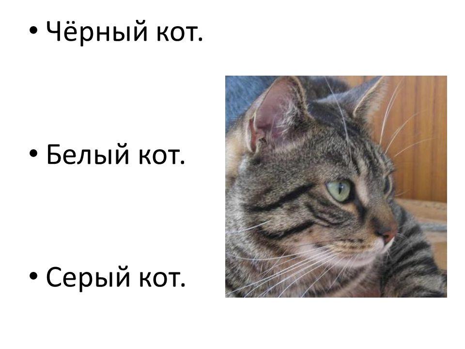 Чёрный кот. Белый кот. Серый кот.