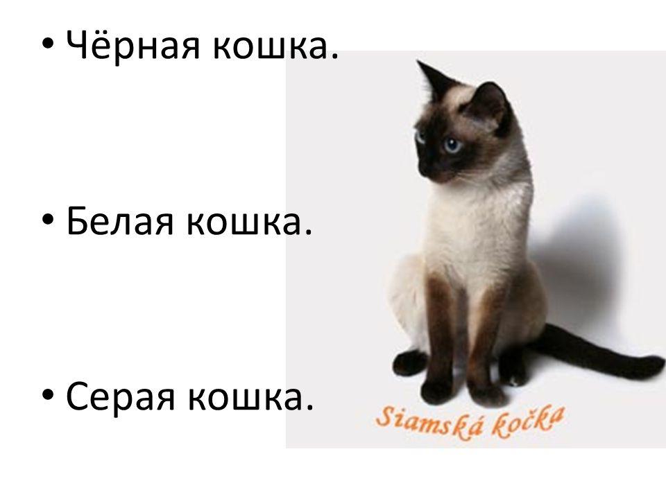 Чёрная кошка. Белая кошка. Серая кошка.