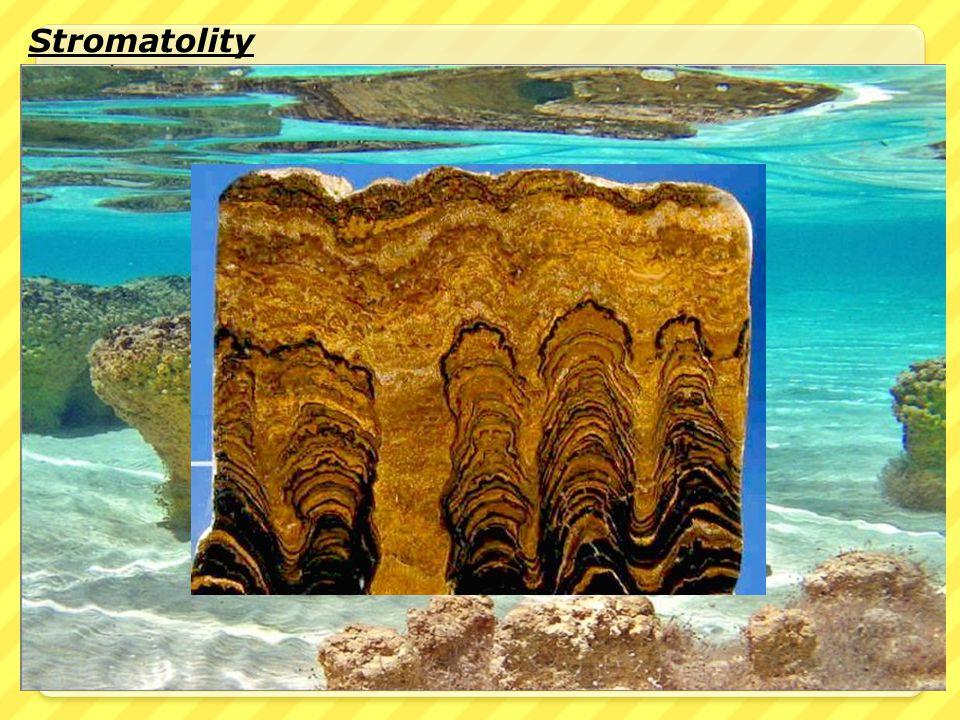 Stromatolity Stromatolity jsou vrstevnaté usazeniny bohaté na vápník, které vznikly činností sinic nebo baktérií schopných fotosyntézy. Vznikaly v bez