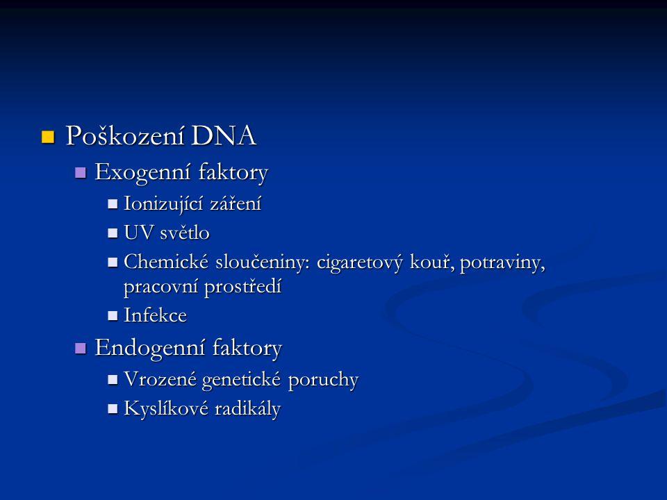 Důsledek poškození DNA – zlomy, inzerce, delece, mutace…mění smysl kodónů Důsledek poškození DNA – zlomy, inzerce, delece, mutace…mění smysl kodónů Opravné machanismy DNA – žádný není universální…vznik geneticky podmíněných nádorů Opravné machanismy DNA – žádný není universální…vznik geneticky podmíněných nádorů Charakteristika nádorové buňky Charakteristika nádorové buňky Ztráta schopnosti apoptózy Ztráta schopnosti apoptózy Schopnost nekonečného dělení Schopnost nekonečného dělení Schopnost invadovat Schopnost invadovat