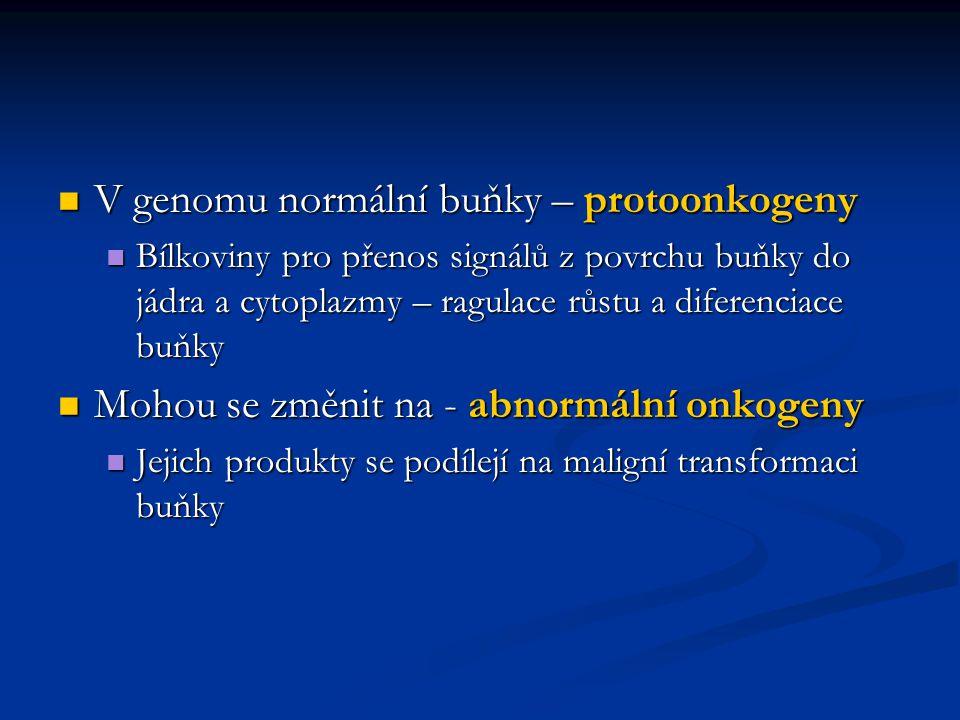 V genomu normální buňky – protoonkogeny V genomu normální buňky – protoonkogeny Bílkoviny pro přenos signálů z povrchu buňky do jádra a cytoplazmy – r
