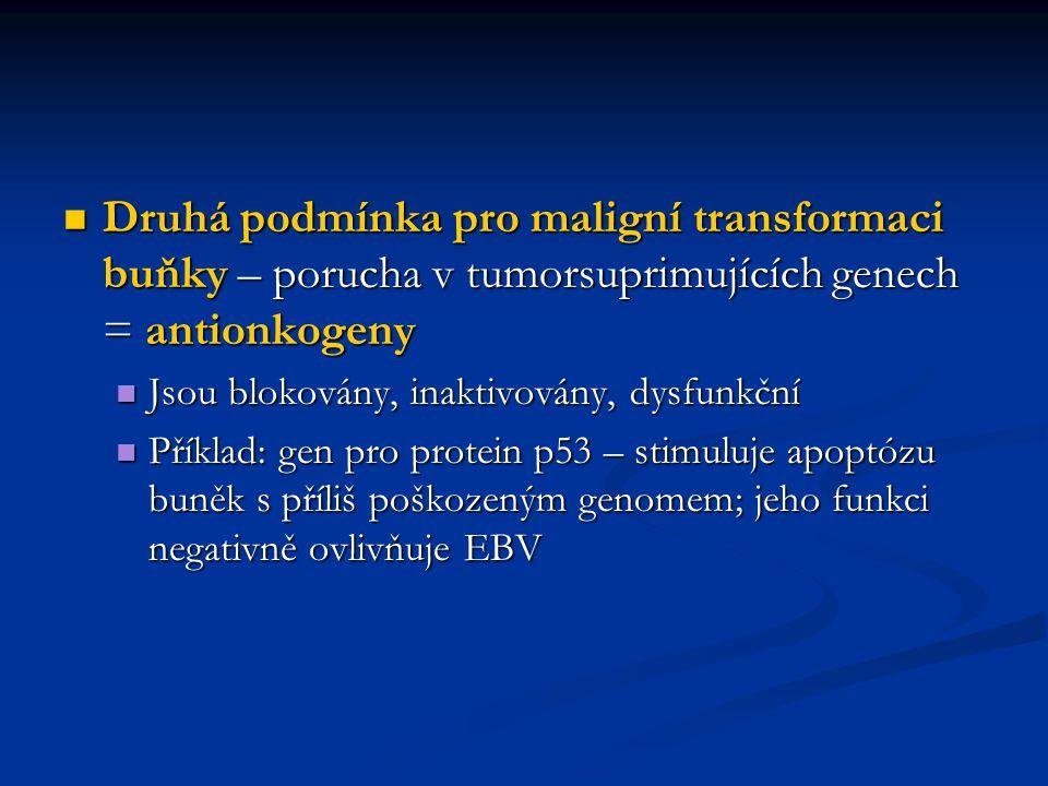 Druhá podmínka pro maligní transformaci buňky – porucha v tumorsuprimujících genech = antionkogeny Druhá podmínka pro maligní transformaci buňky – por