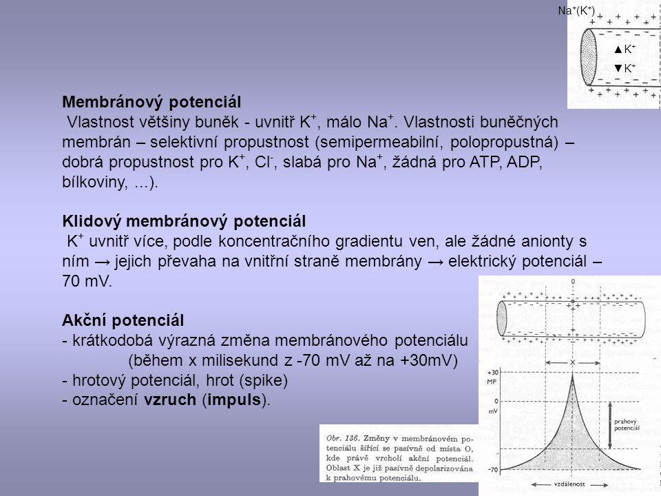 Membránový potenciál Vlastnost většiny buněk - uvnitř K +, málo Na +. Vlastnosti buněčných membrán – selektivní propustnost (semipermeabilní, poloprop