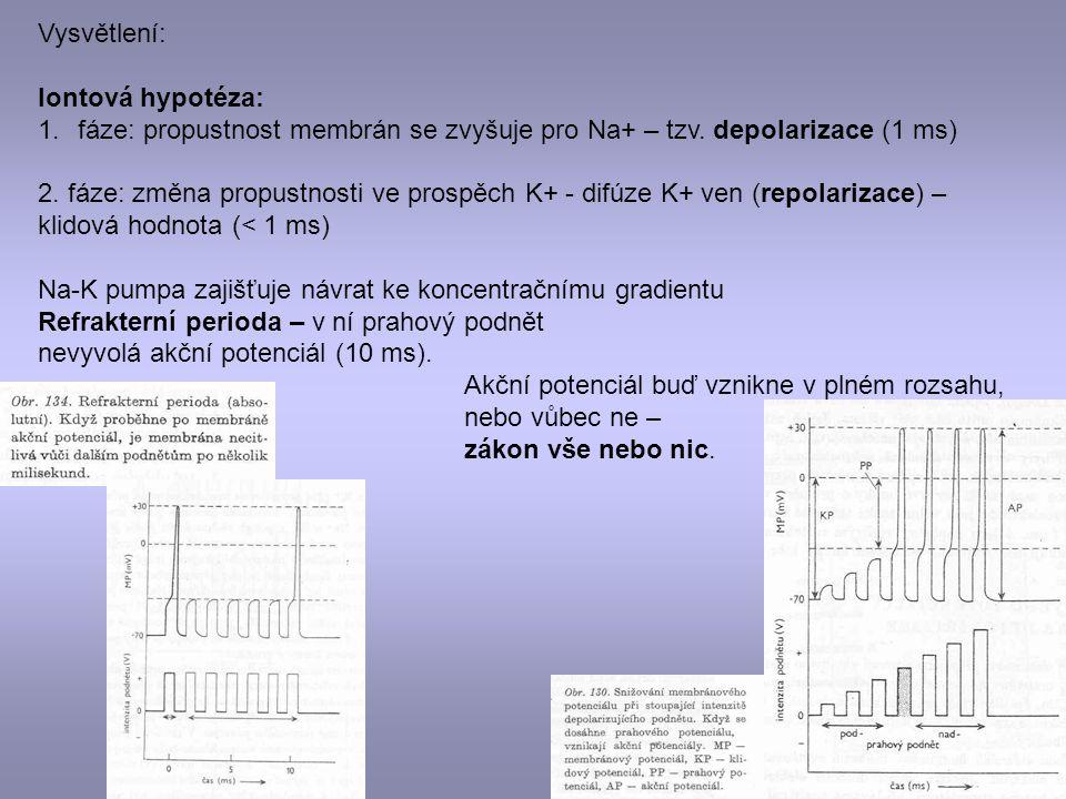 Vysvětlení: Iontová hypotéza: 1.fáze: propustnost membrán se zvyšuje pro Na+ – tzv. depolarizace (1 ms) 2. fáze: změna propustnosti ve prospěch K+ - d