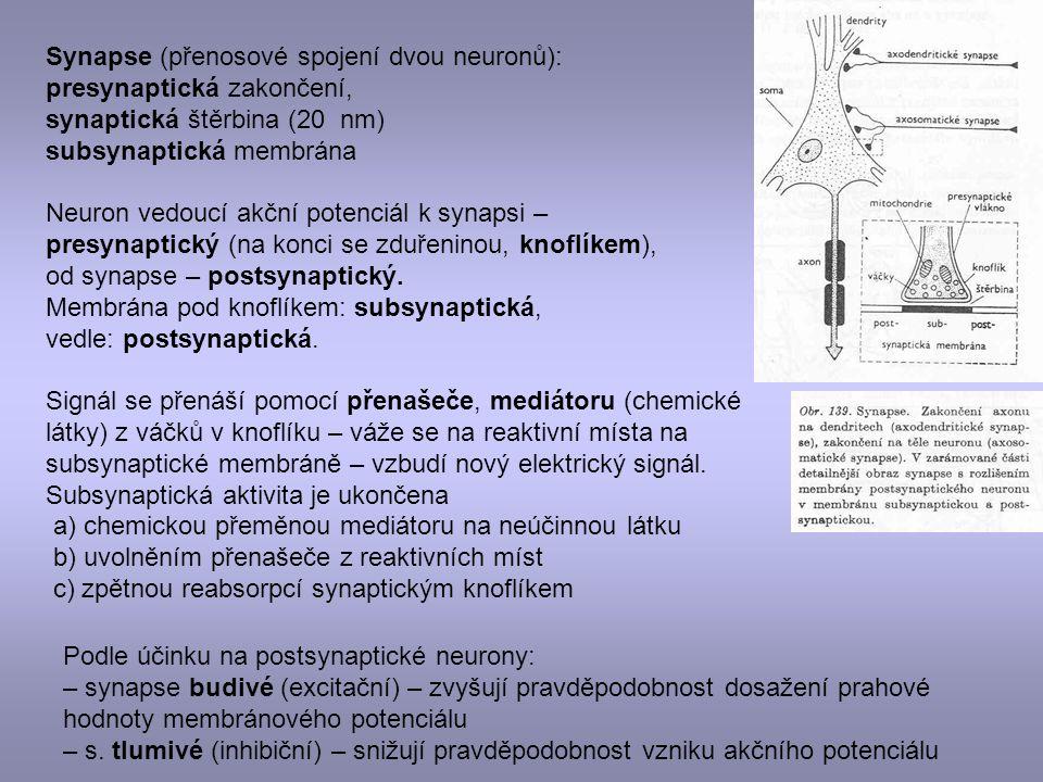Synapse (přenosové spojení dvou neuronů): presynaptická zakončení, synaptická štěrbina (20 nm) subsynaptická membrána Neuron vedoucí akční potenciál k