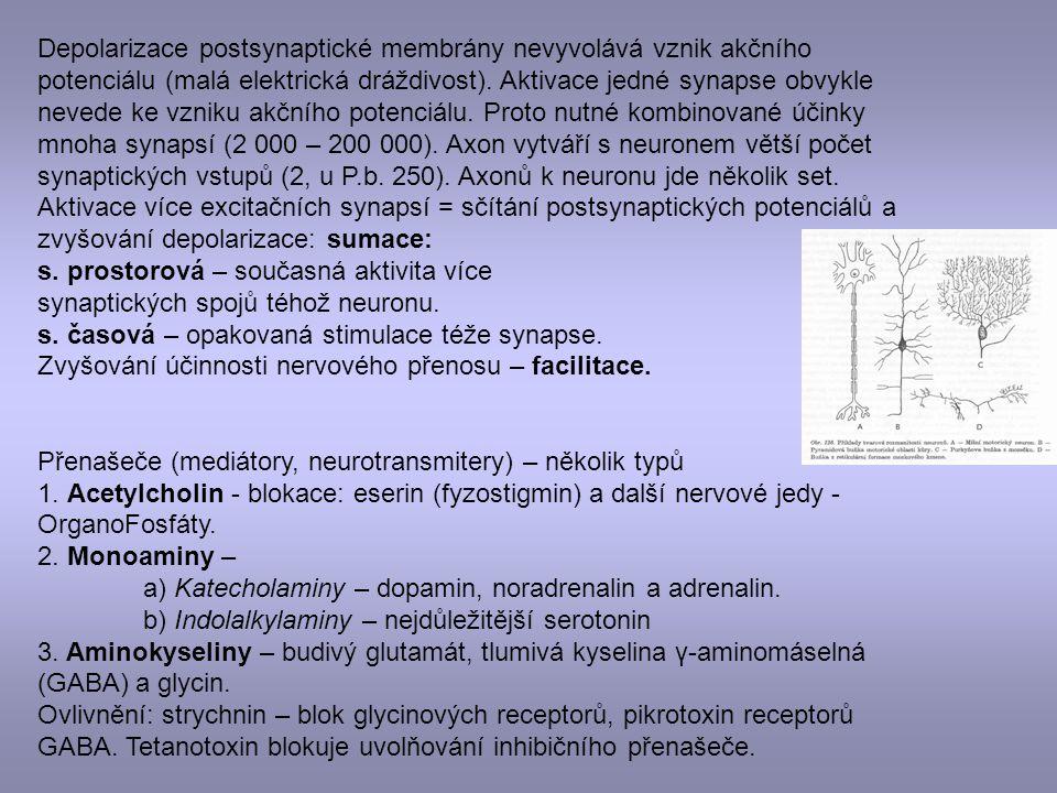 Depolarizace postsynaptické membrány nevyvolává vznik akčního potenciálu (malá elektrická dráždivost). Aktivace jedné synapse obvykle nevede ke vzniku