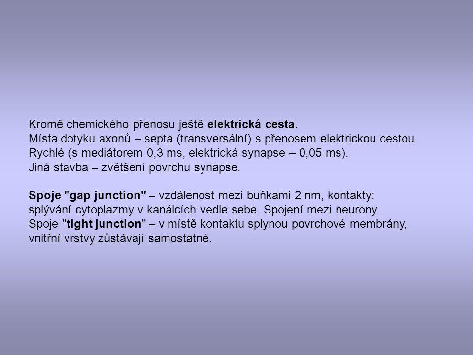 Kromě chemického přenosu ještě elektrická cesta. Místa dotyku axonů – septa (transversální) s přenosem elektrickou cestou. Rychlé (s mediátorem 0,3 ms