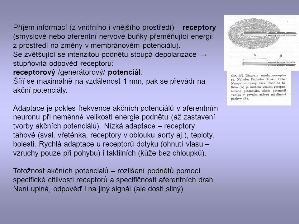 Příjem informací (z vnitřního i vnějšího prostředí) – receptory (smyslové nebo aferentní nervové buňky přeměňující energii z prostředí na změny v memb