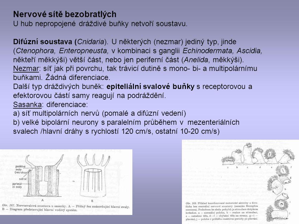 Nervové sítě bezobratlých U hub nepropojené dráždivé buňky netvoří soustavu. Difúzní soustava (Cnidaria). U některých (nezmar) jediný typ, jinde (Cten