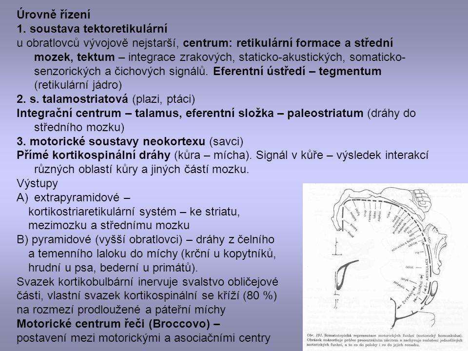 Úrovně řízení 1. soustava tektoretikulární u obratlovců vývojově nejstarší, centrum: retikulární formace a střední mozek, tektum – integrace zrakových