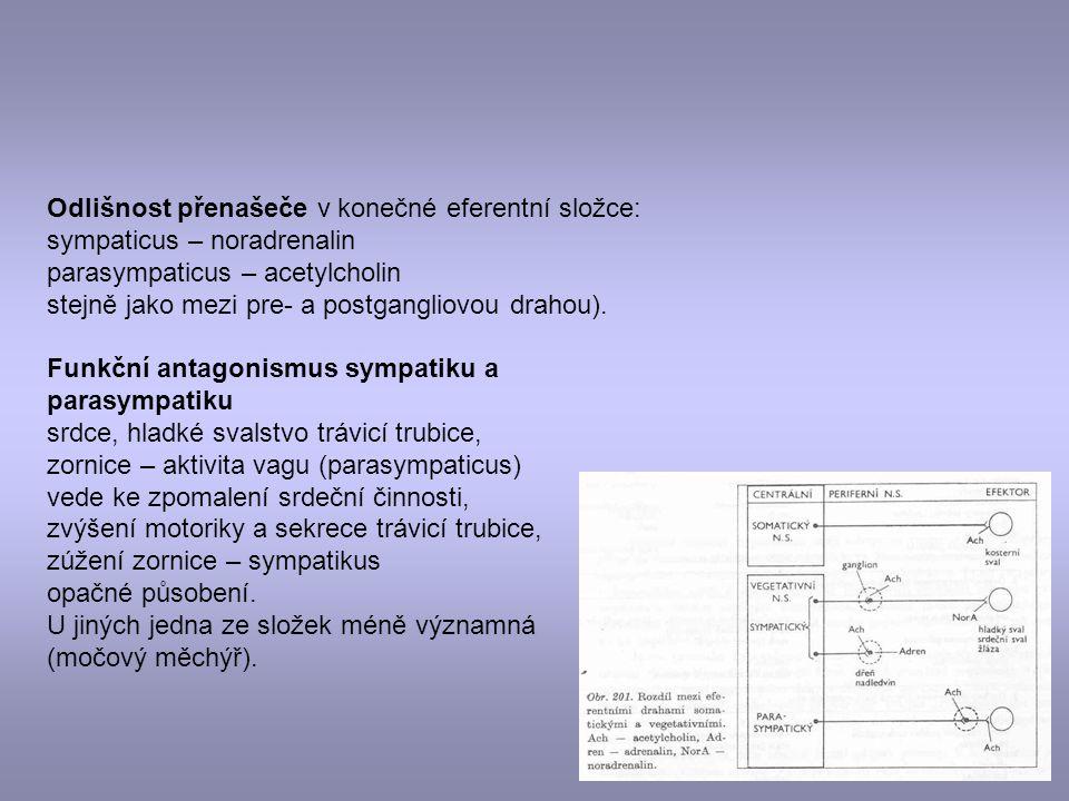 Odlišnost přenašeče v konečné eferentní složce: sympaticus – noradrenalin parasympaticus – acetylcholin stejně jako mezi pre- a postgangliovou drahou)
