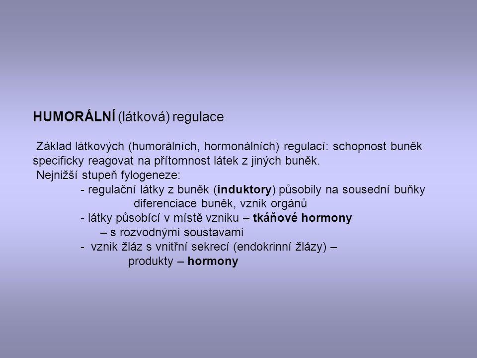 HUMORÁLNÍ (látková) regulace Základ látkových (humorálních, hormonálních) regulací: schopnost buněk specificky reagovat na přítomnost látek z jiných b