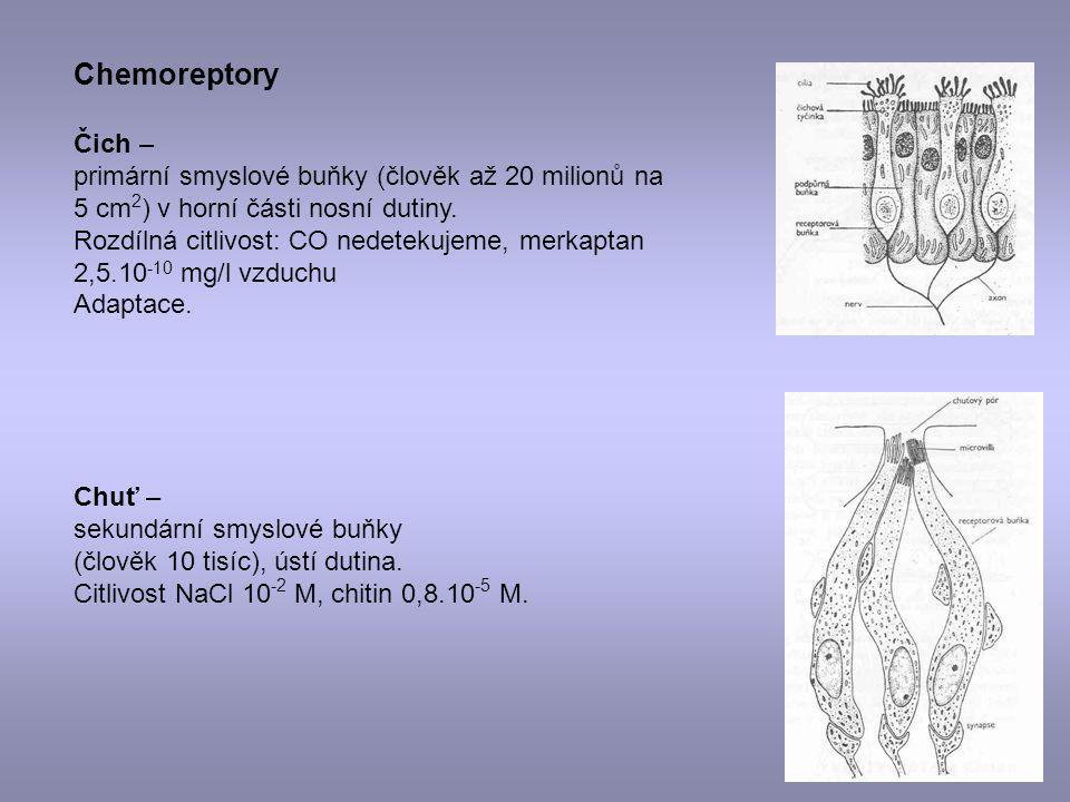 Chemoreptory Čich – primární smyslové buňky (člověk až 20 milionů na 5 cm 2 ) v horní části nosní dutiny. Rozdílná citlivost: CO nedetekujeme, merkapt