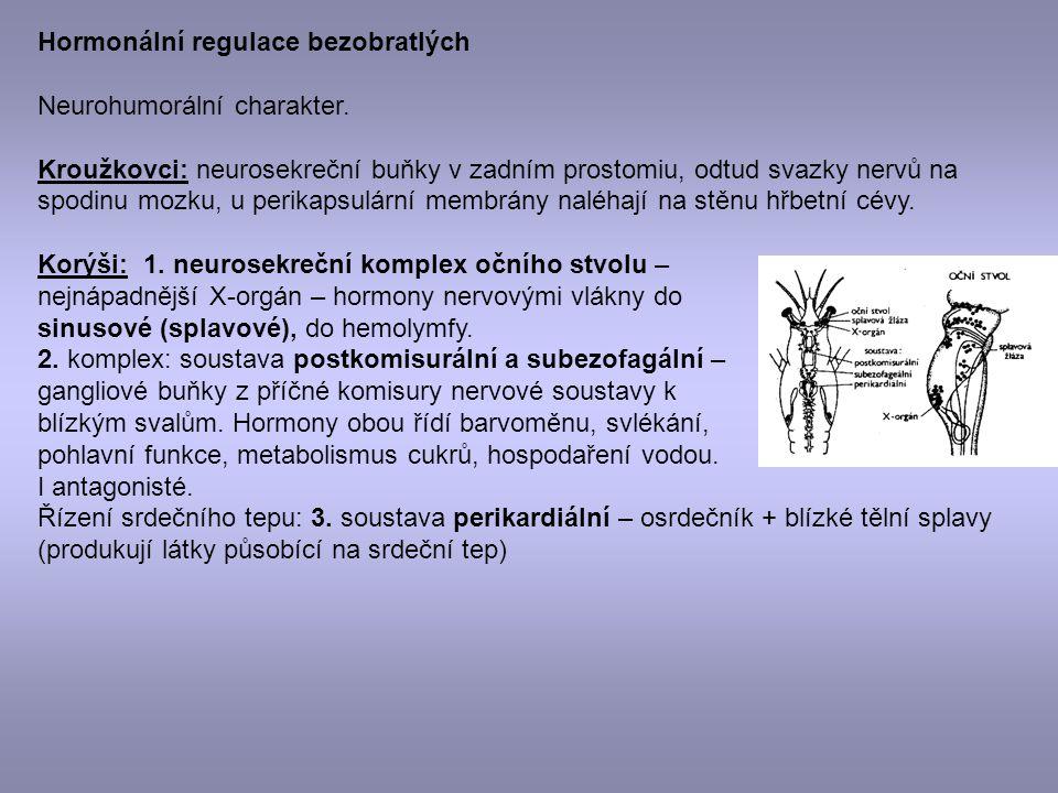 Hormonální regulace bezobratlých Neurohumorální charakter. Kroužkovci: neurosekreční buňky v zadním prostomiu, odtud svazky nervů na spodinu mozku, u