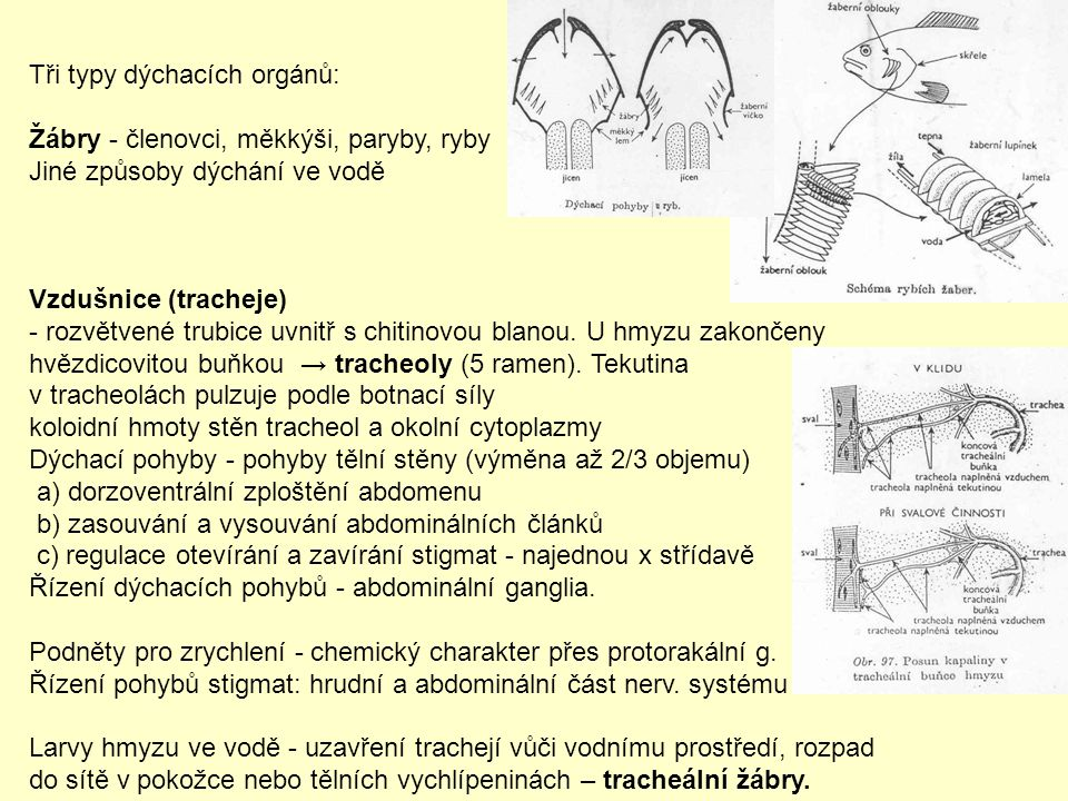 Tři typy dýchacích orgánů: Žábry - členovci, měkkýši, paryby, ryby Jiné způsoby dýchání ve vodě Vzdušnice (tracheje) - rozvětvené trubice uvnitř s chi