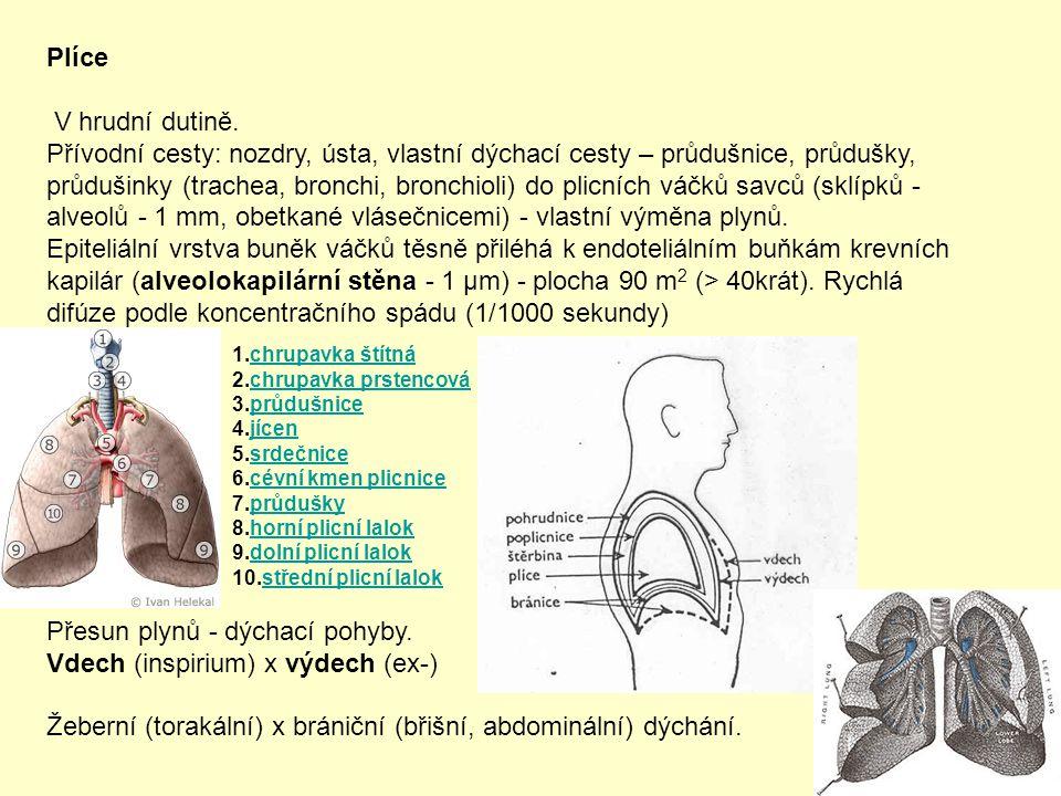 Plíce V hrudní dutině. Přívodní cesty: nozdry, ústa, vlastní dýchací cesty – průdušnice, průdušky, průdušinky (trachea, bronchi, bronchioli) do plicní